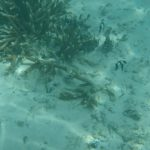 珊瑚礁と熱帯魚1