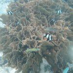 珊瑚礁と熱帯魚2